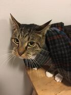 Archie scarf