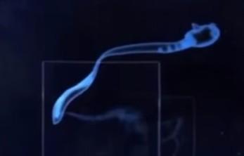 File:Silverswimmer (6).jpg