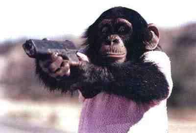 File:Monkey with a gun.jpg