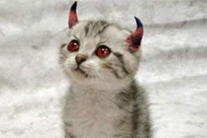 File:230113-kitten.jpg