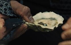 Peeta-oyster
