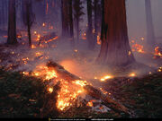 Seqouia Forest Fire