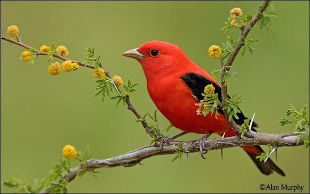 File:Beautiful-Birds12-1-.jpg