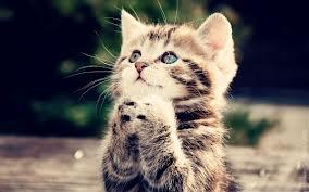 File:Praying kitten.jpg