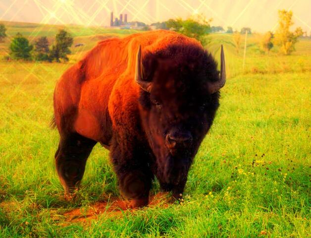 File:Bison Mutt 2.jpg