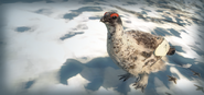 SplashScreen rock ptarmigan