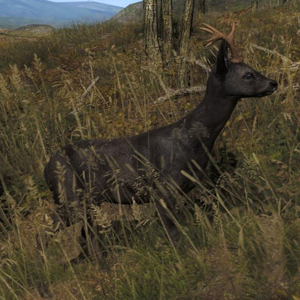 Hunters Ridge Scorecard: Image - Species ROE B Melanistic.jpg