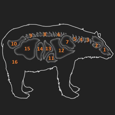 Black bear organs