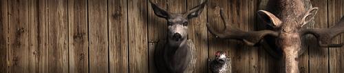 Header image species 3