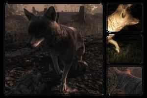 Species coyote 700