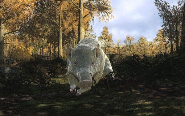 Musodacan albino wild boar 1229