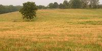Susuno Fields