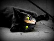Adorable cat 9