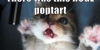 Funny Cats/gallery