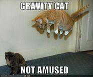 Gravity cat not amused