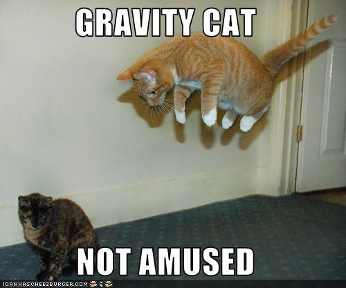 Image - Gravity cat not amused.jpg | Thekittycat Wiki ...