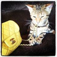Insagram kitty 33