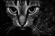 Black and White cat phtography.