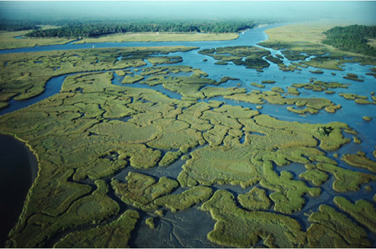 File:Everglades.png