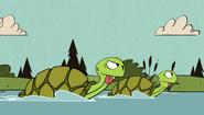 S2E08B Turtles
