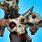 Unlock Enrager Bone Puppeteer