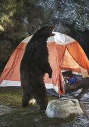 Camping 11 Bear