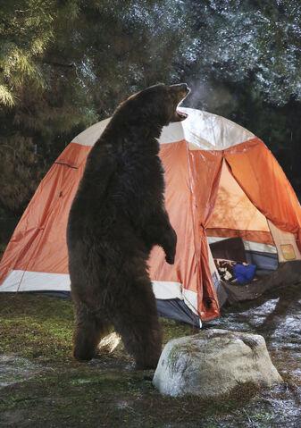 File:Camping 11 Bear.jpg