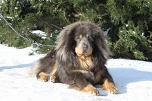 Aigrette Velikiy (Tsaluma say strazce z Tibetu x Legenda Tibeta vlastelin kolets)
