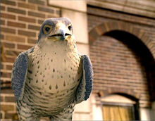 Falcon the falcon