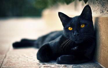 Black-cat-yellow-eyes