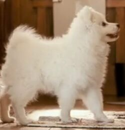 Kevin(dog)