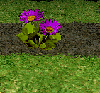 File:Purple Fairy Ring Flower.png