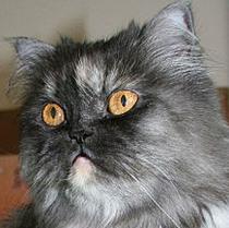 Theresa Cat