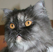 File:Theresa Cat.png