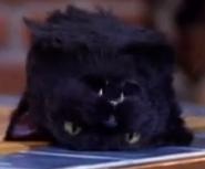 Salem head