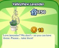 ValleyView Lavender