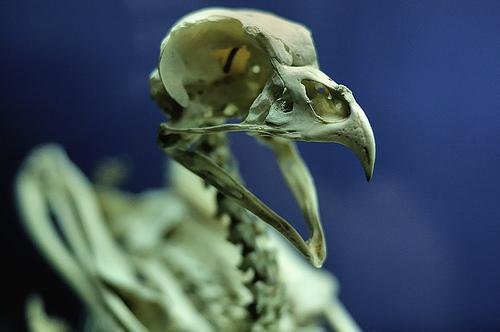 File:I shoot birds.jpg
