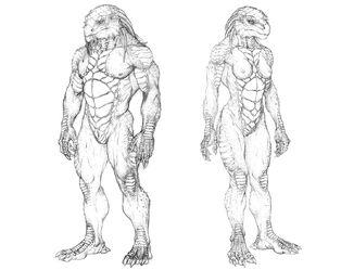Draconian anatomy