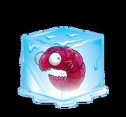 Cold-Prawn