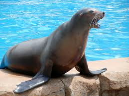 File:Sea lion 1.jpg