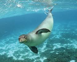 File:Seal 1.jpg