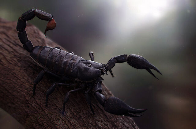 File:Monster - Scorpion.jpg