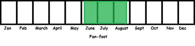 Fan-foot TL