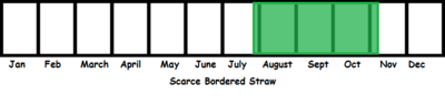 SCarce Bordered Straw TL