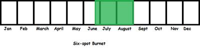 Six-spot Burnet TL