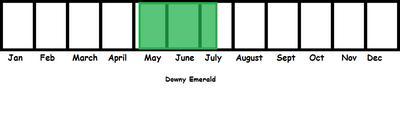 Downy Emerald TL