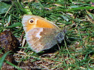 Small heath KN