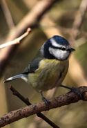 Birds.2011 091