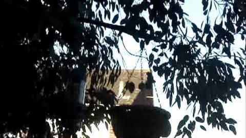 British Wildlife Clips - House Sparrow