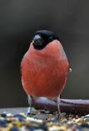 Birds.2011 061